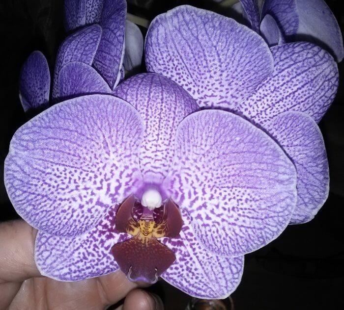 Цветы из фоамирана орхидея