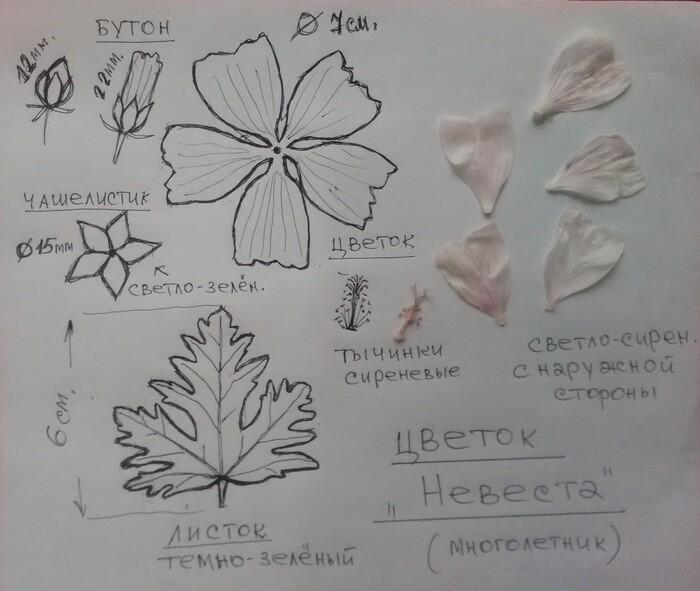 шаблон цветка невеста